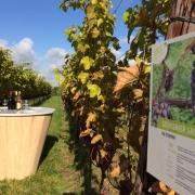 Wijnproef tafel in wijngaard van Betuws wijndomein